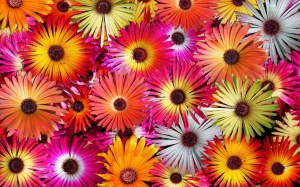 Letterbalm Colorful Flowers