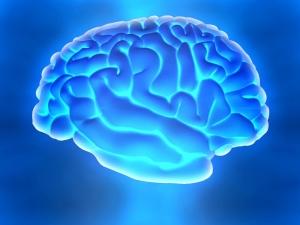Letterbalm Brain