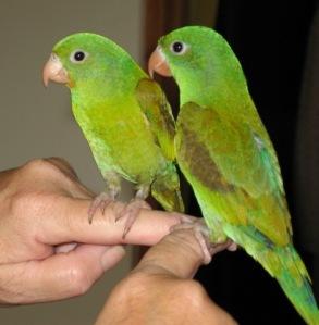 Letterbalm Parakeets